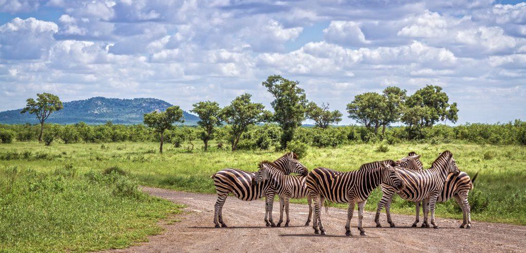 Kruger Park Self Drive Holiday - zebra