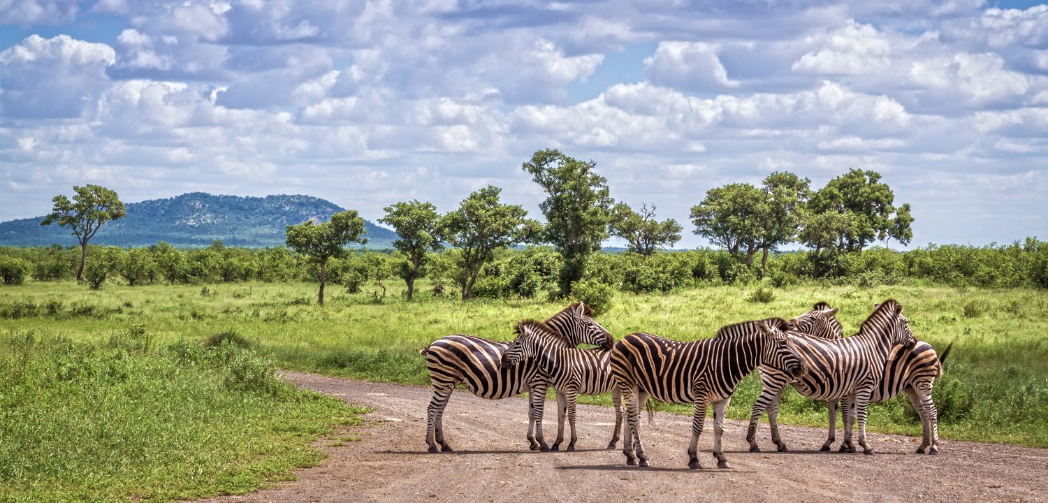 Kruger Park Self Drive Holiday - zebra