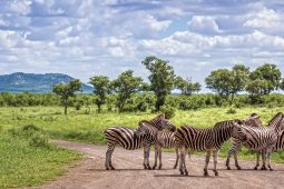 Beginners guide to a self-drive Kruger Park holiday