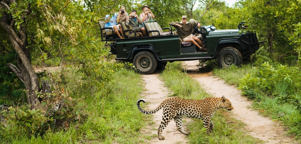 Kruger Park Self Drive Holiday - game drive