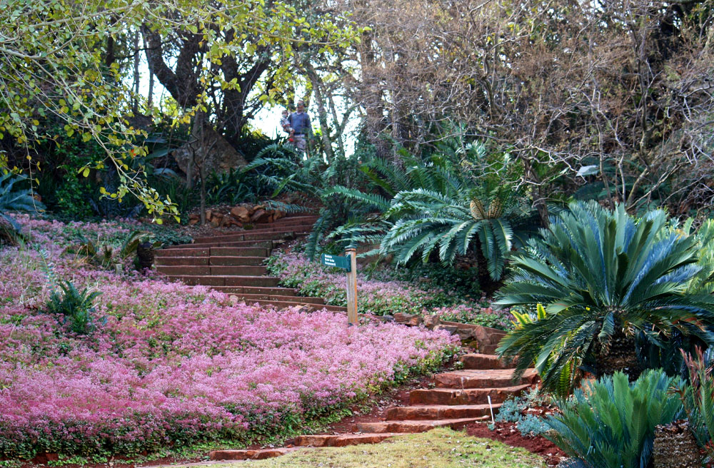 Best road trips to take from Cape Town, Jozi and Durbs - Pretoria Botanical Gardens