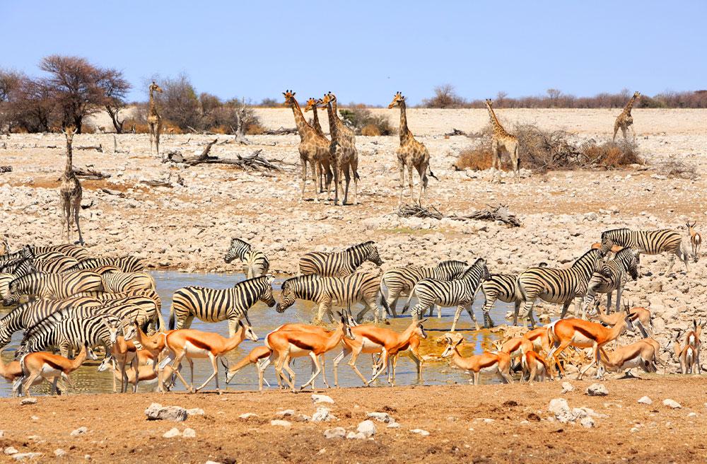 Etosha National Park - Why We Love Namibia